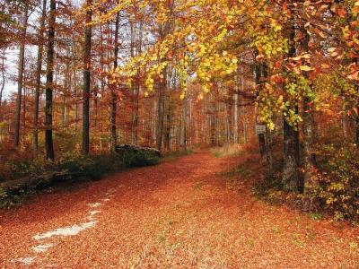 Wald bei Meidelstetten